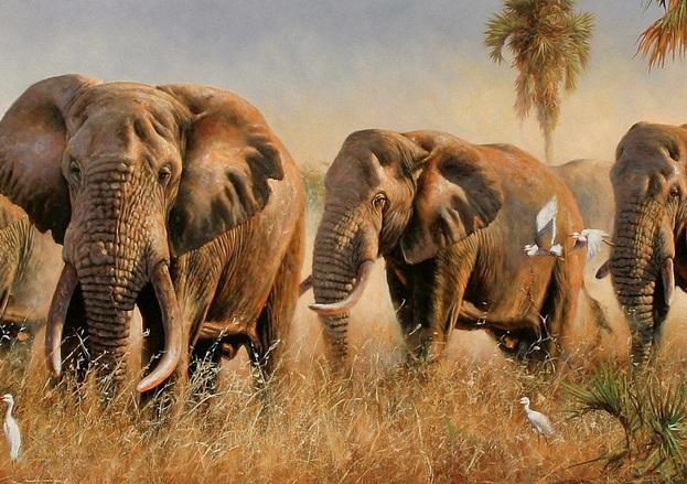 Слоны слышат дождь на расстоянии в 240 километров CVAVR AVR CodeVision cvavr.ru