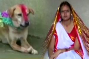 В Индии девушка вышла замуж за бездомную собаку CVAVR AVR CodeVision cvavr.ru