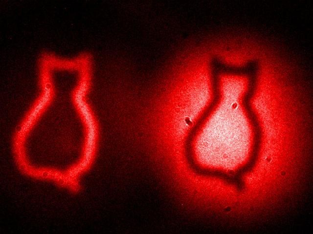 Физики сделали снимок несуществующего кота CVAVR AVR CodeVision cvavr.ru