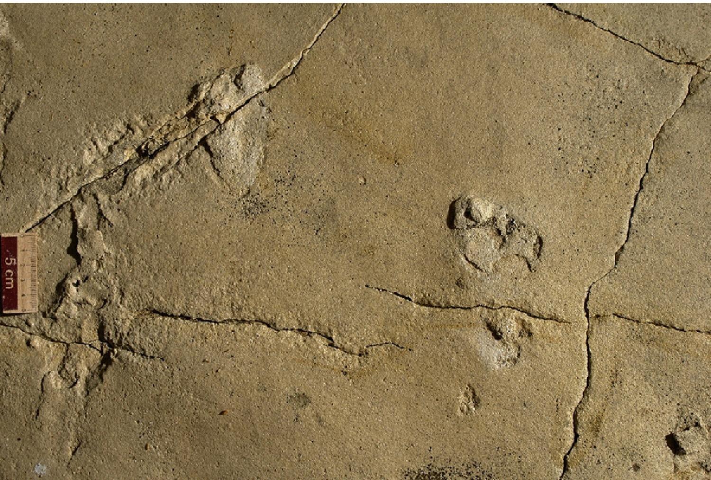 Археологи отыскали следы человека возрастом 5,7 млн лет