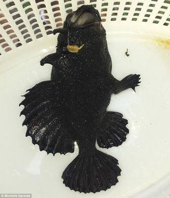 В Австралии поймали необычную рыбу, которую ученые не могут идентифицировать