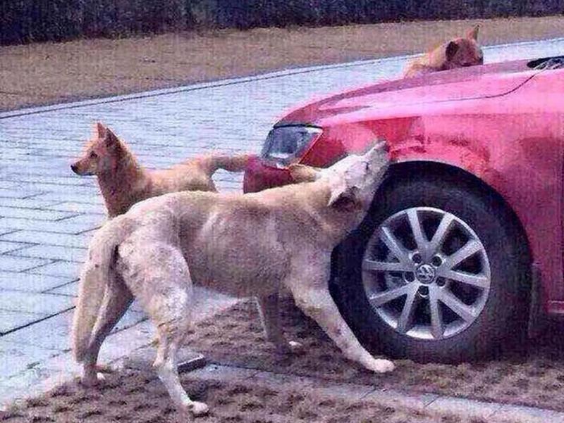 Может ли животное мстить людям