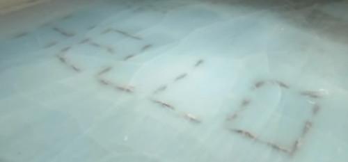Японцы заморозили 5000 рыб на катке